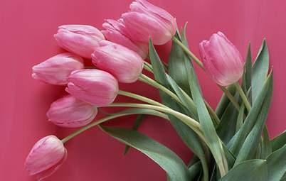 Если нравится розовый цвет что это значит