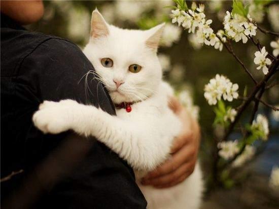 Гороскоп для тех кто родился в год кота