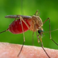 Как унять зуд от укуса насекомых?