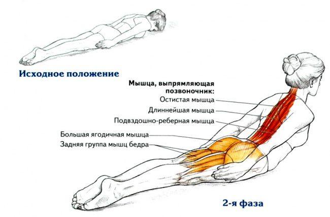 Упражнения для осанки в положении лежа