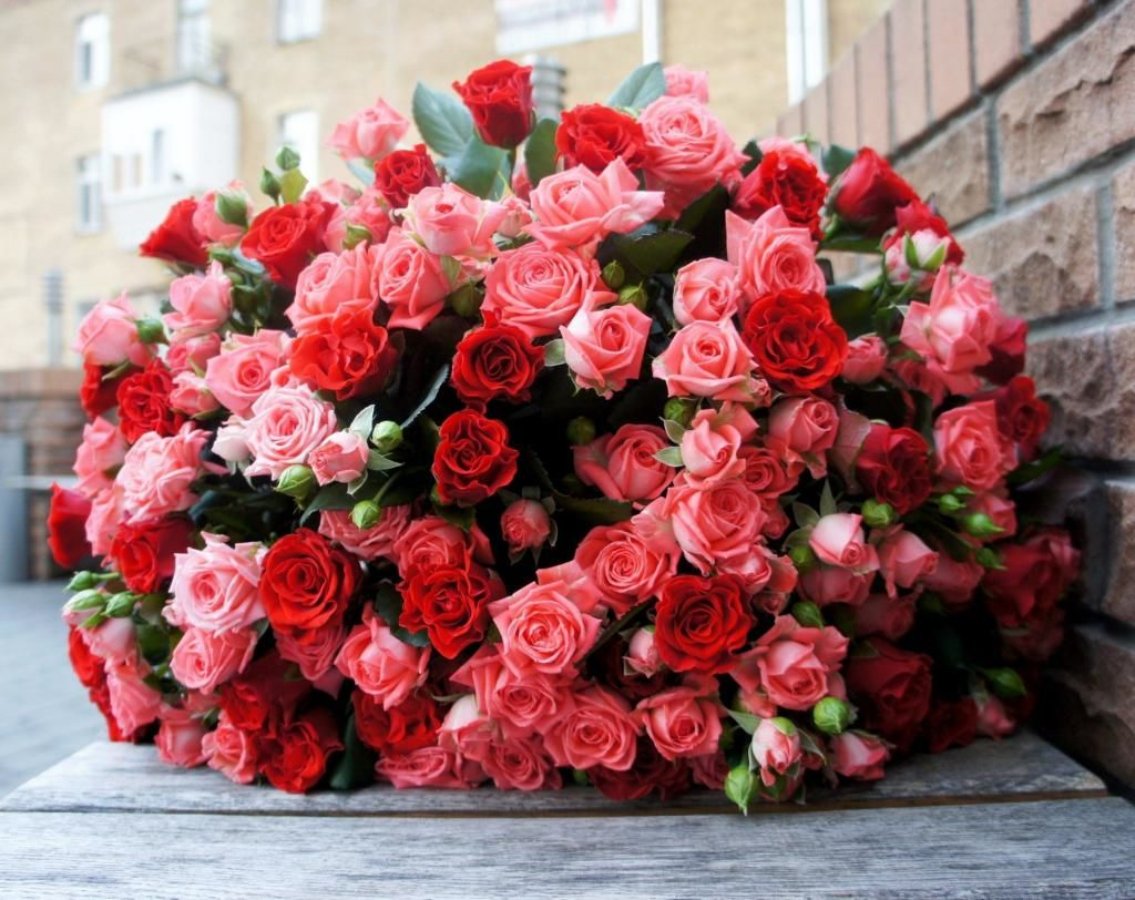 Дарим розы на 8 марта: значение цвета и символика цветка