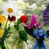 Гороскоп растений: какие растения подходят каждому знаку зодиака